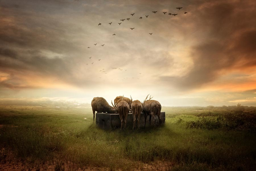 Photograph togetherness by budi 'ccline' on 500px