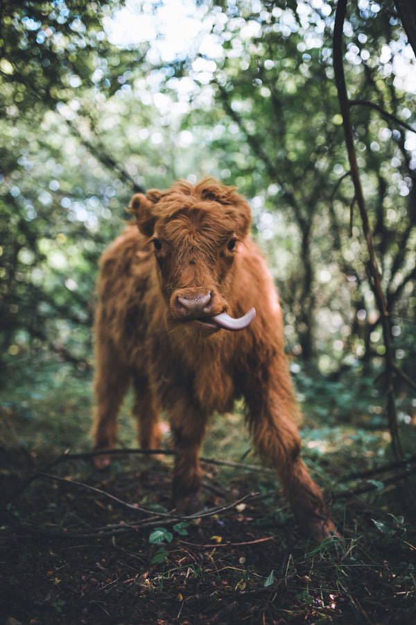 Smile! by Johannes Hulsch on 500px.com