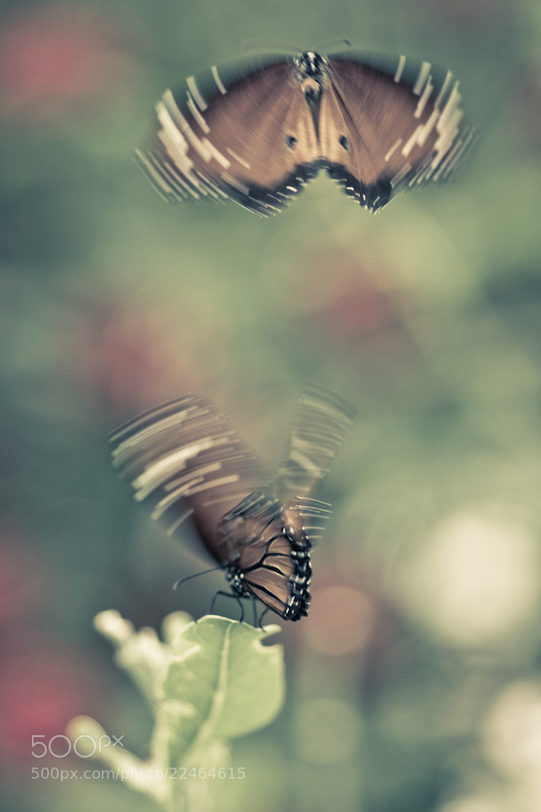 Photograph FLUTTER by Suzanne Clements on 500px