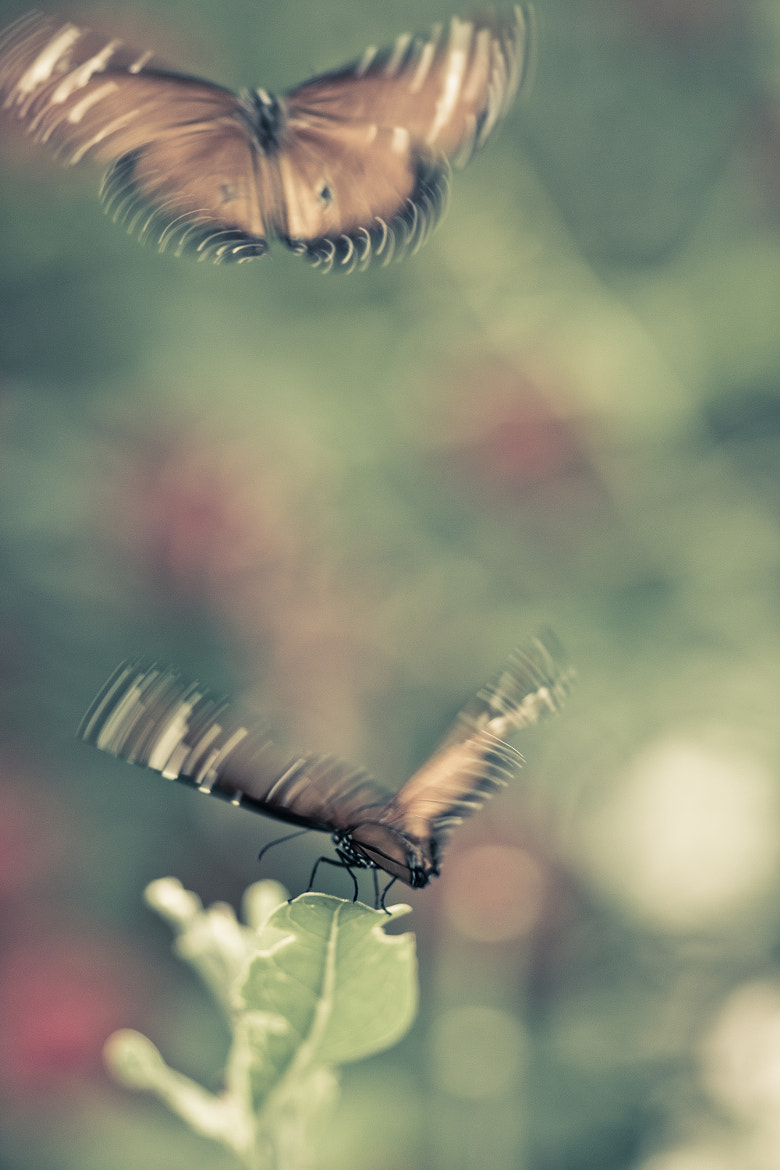 Photograph FLUTTER II by Suzanne Clements on 500px