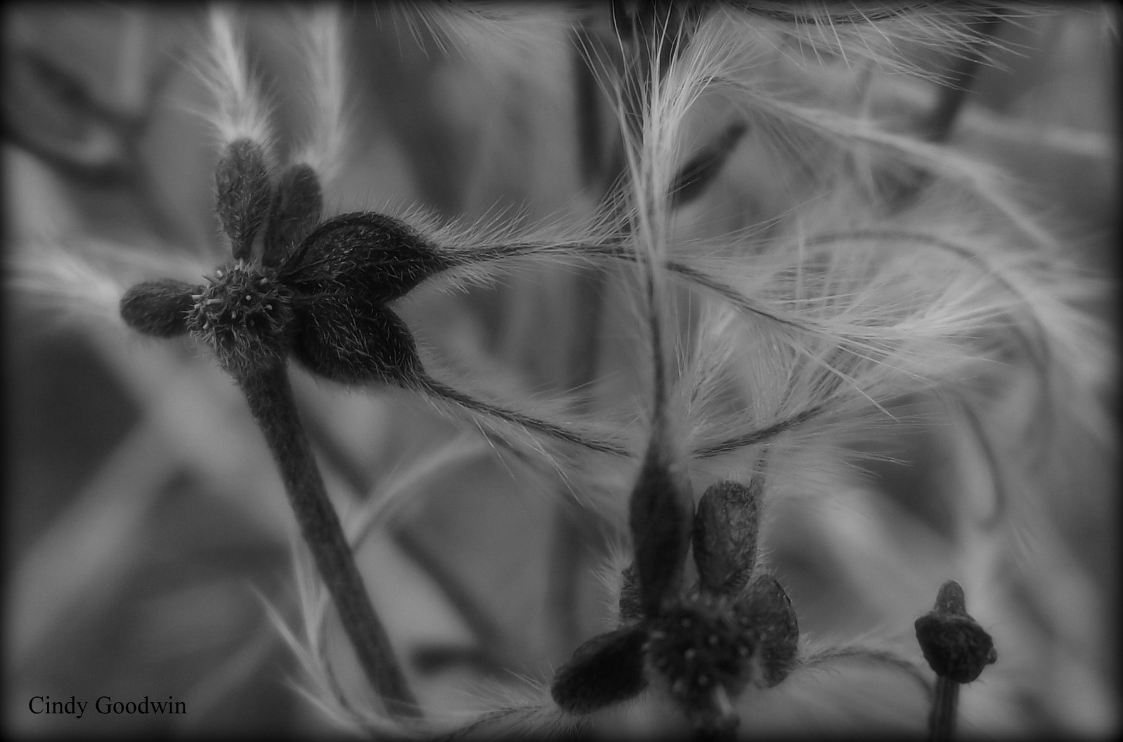 Photograph Hairy by Cindy Goodwin on 500px