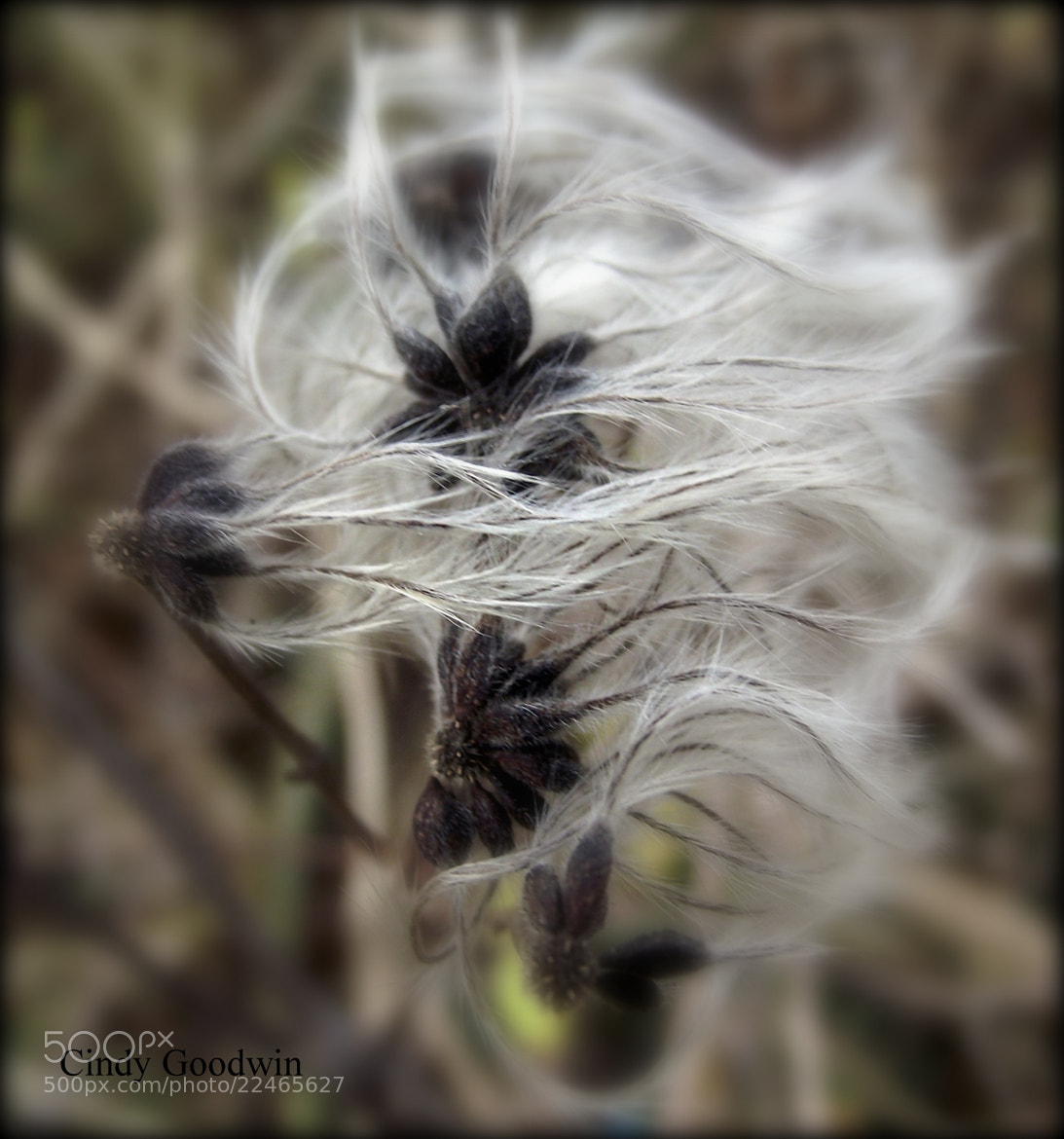 Photograph Bad Hair day by Cindy Goodwin on 500px