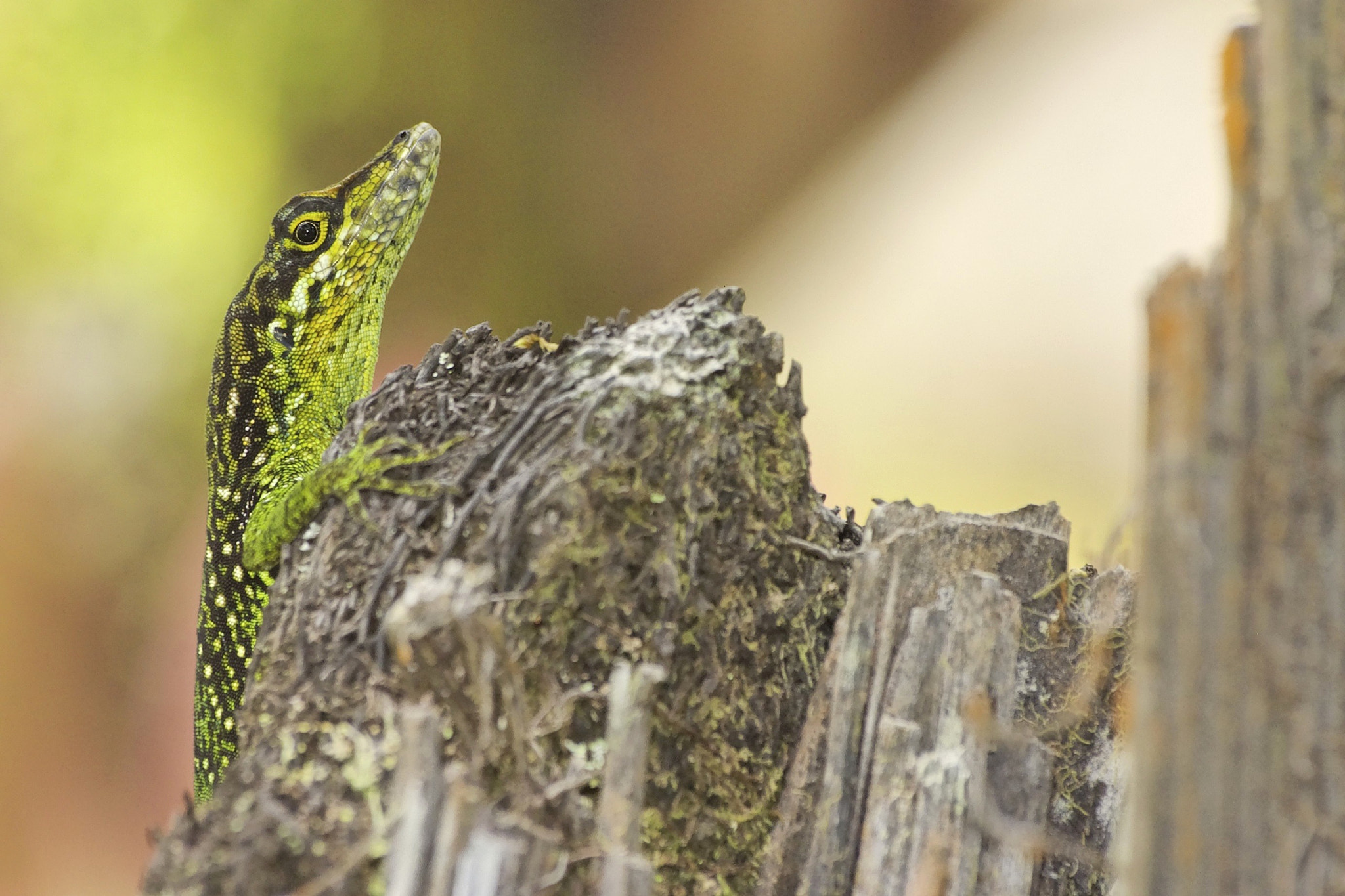 Photograph Lizard by Christophe Candela on 500px