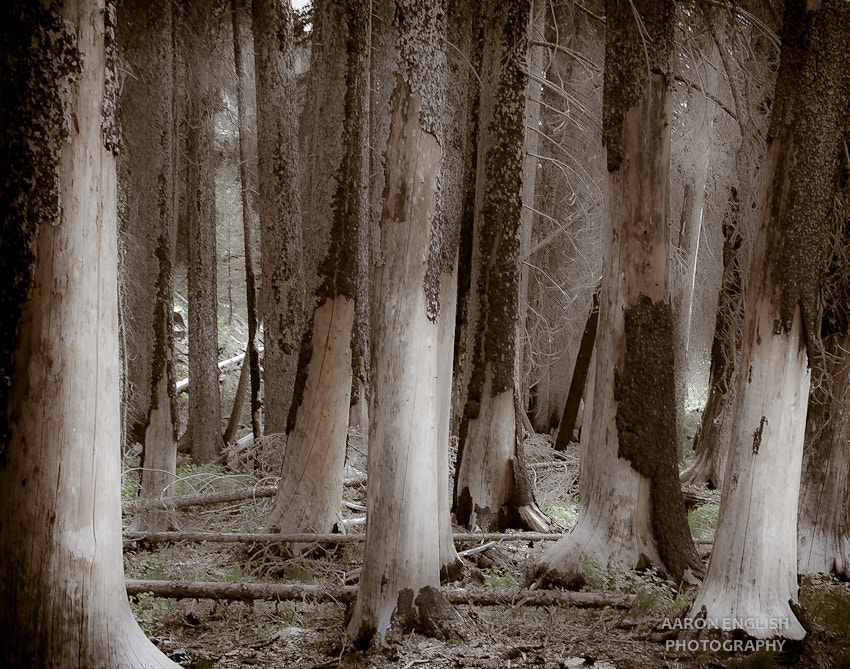 Photograph Trees by Aaron English on 500px