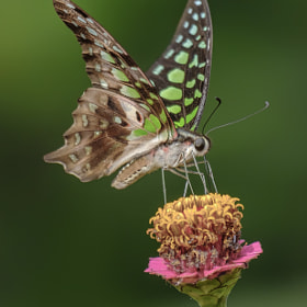 Butterfly Pollinating An Flower
