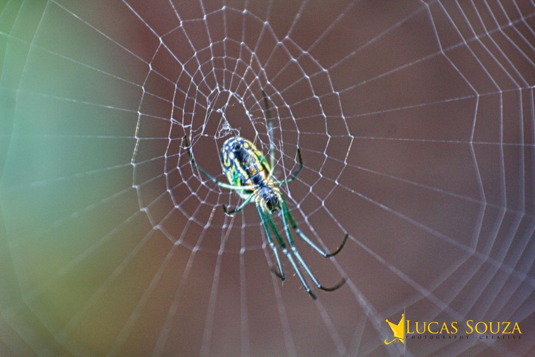 Photograph spider by Lucas Souza on 500px