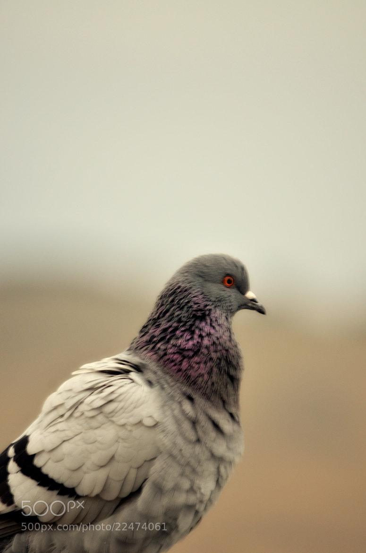 Photograph Portrait Of A Birdy  by Senthil Balakrishnan on 500px