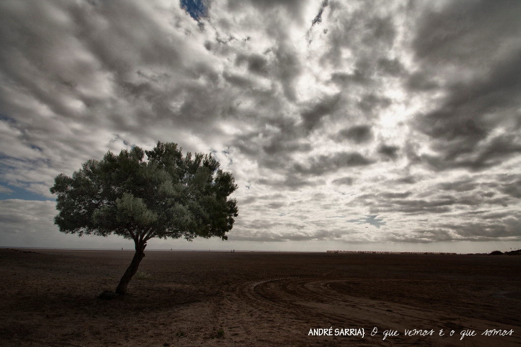 Photograph the tree and the wind by André Sarria on 500px