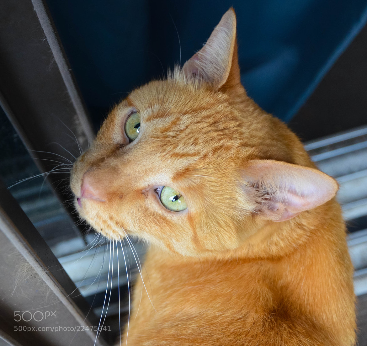 Photograph 0146 Fred  by Matthias F on 500px