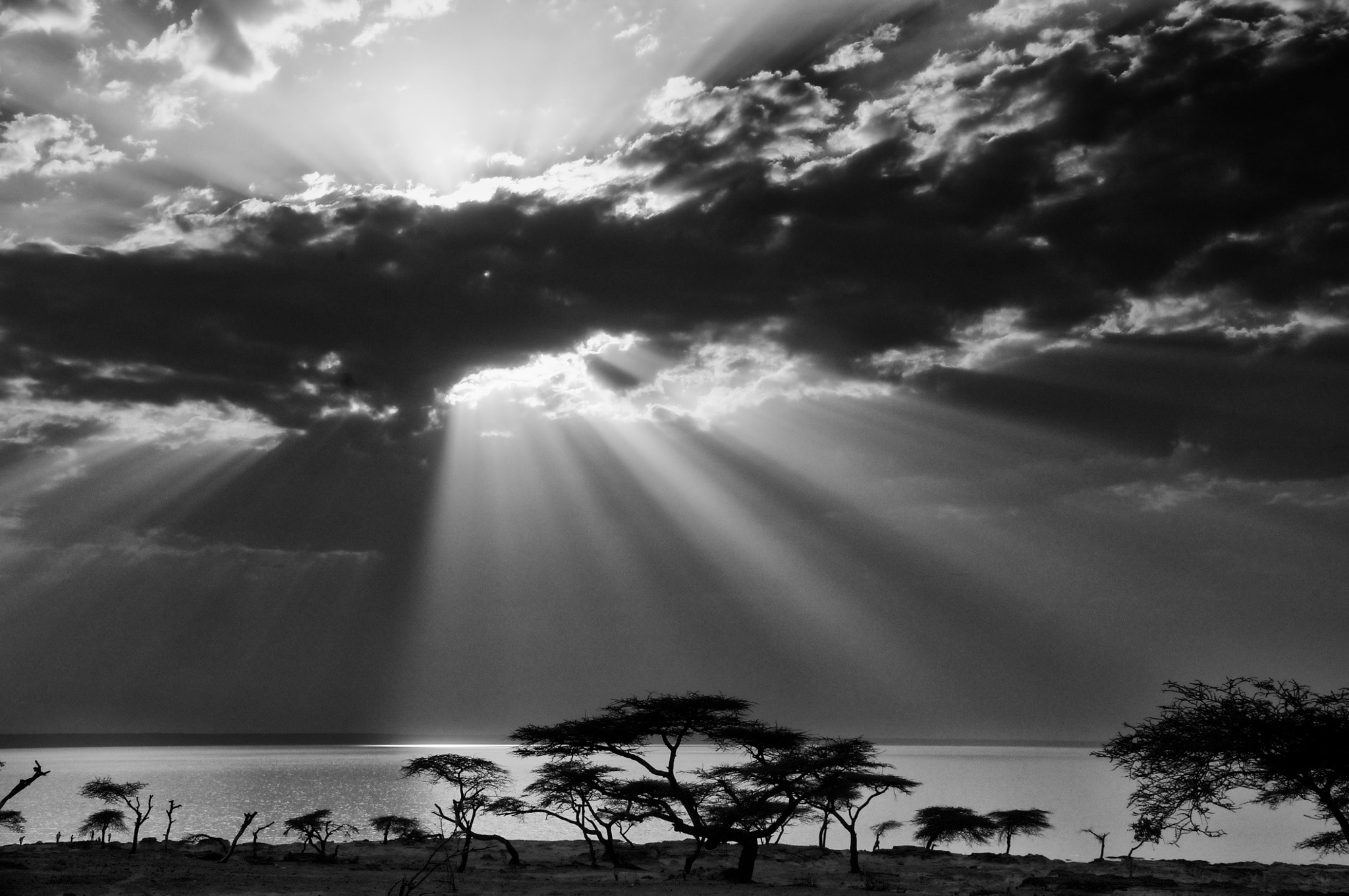 Photograph Acacias in silhouette by Trevor Cole on 500px