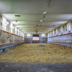 Landesgestüt Marbach - Stall