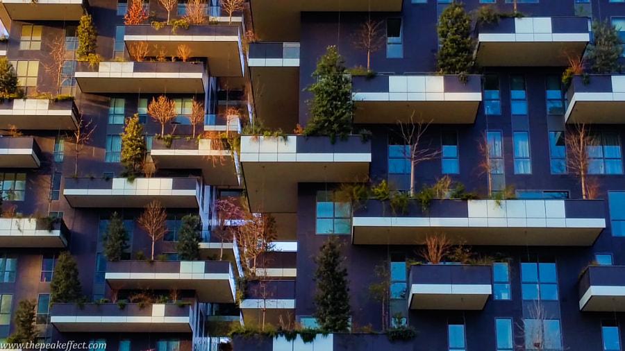 Foresta Verticale by Donato Scarano on 500px.com