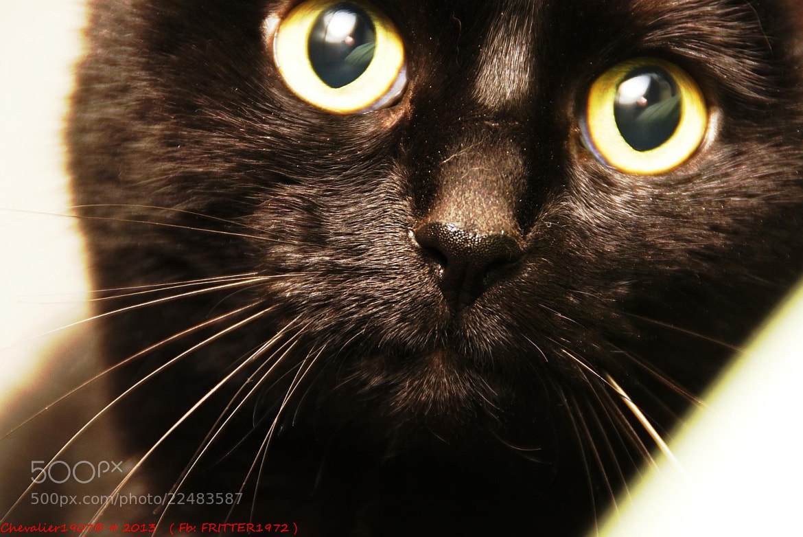 Photograph CATS by Frederic Ritter on 500px