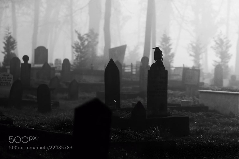Photograph Crow by Cüneyt Tomruk on 500px
