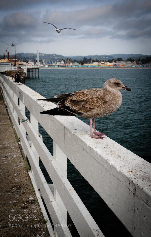 Photograph Santa Cruz Wharf, California by Maïlys Fortune on 500px