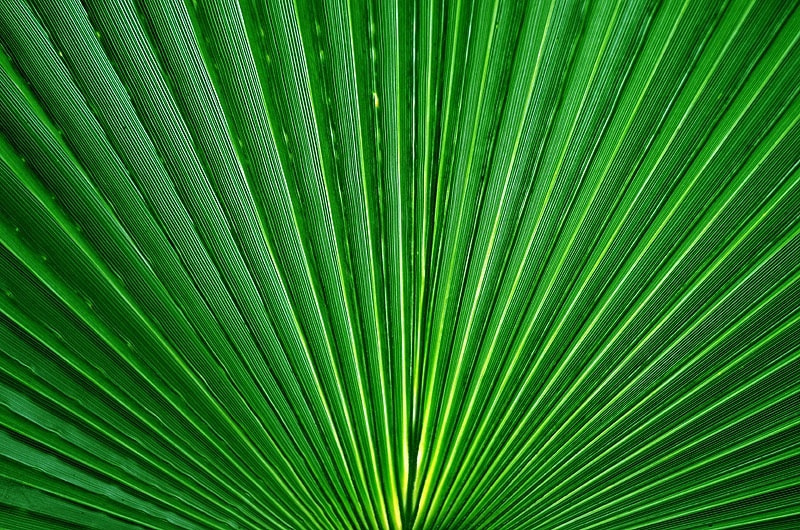 Photograph Abstract Nature by Aliaa Ibrahim on 500px