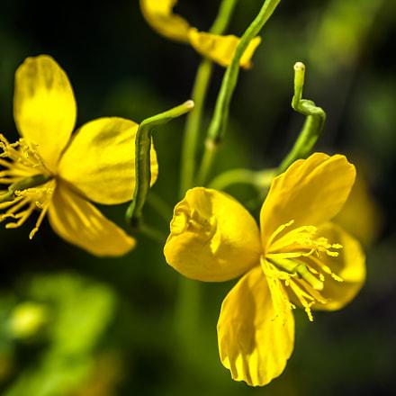 *** field flowers ***