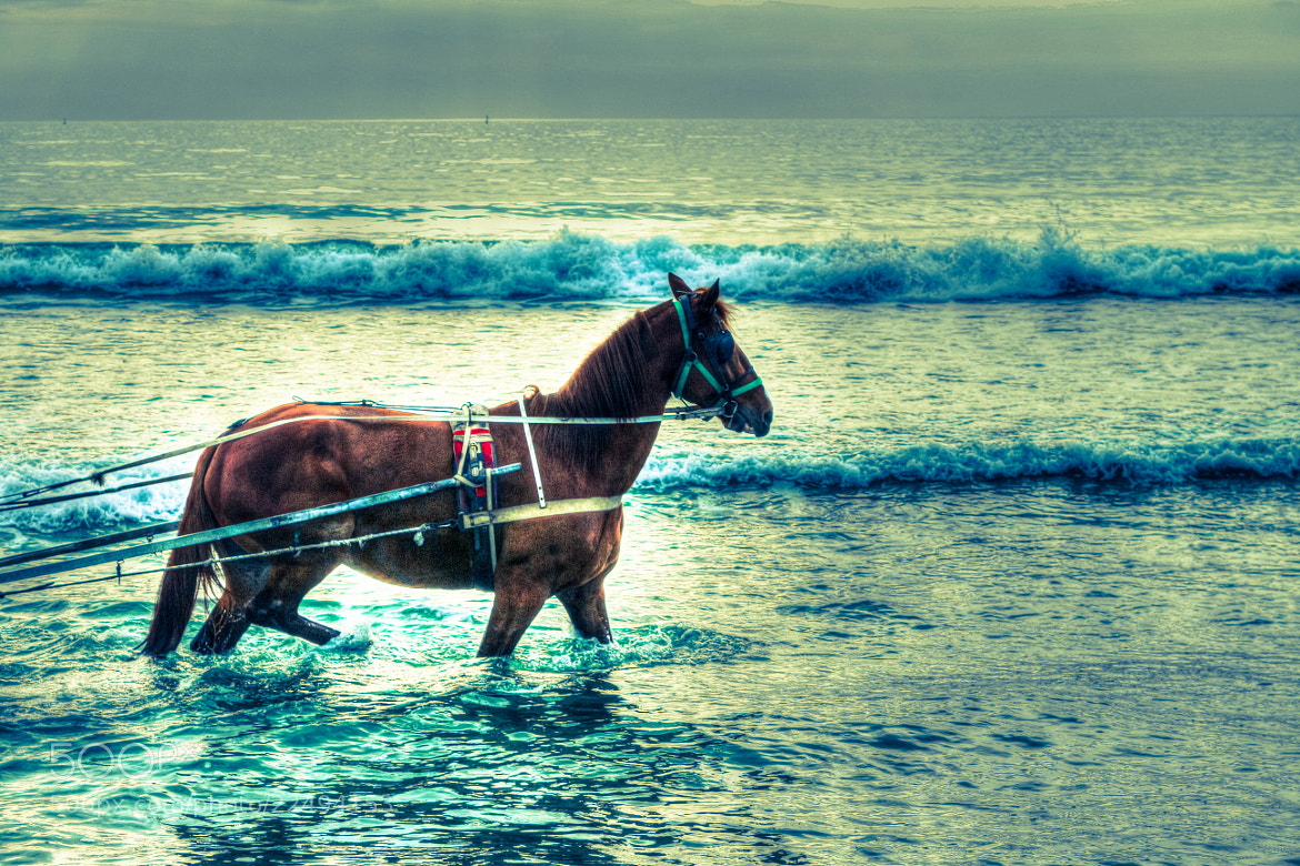 Photograph Only the horses can run in the sea by Francesco Rattenni on 500px
