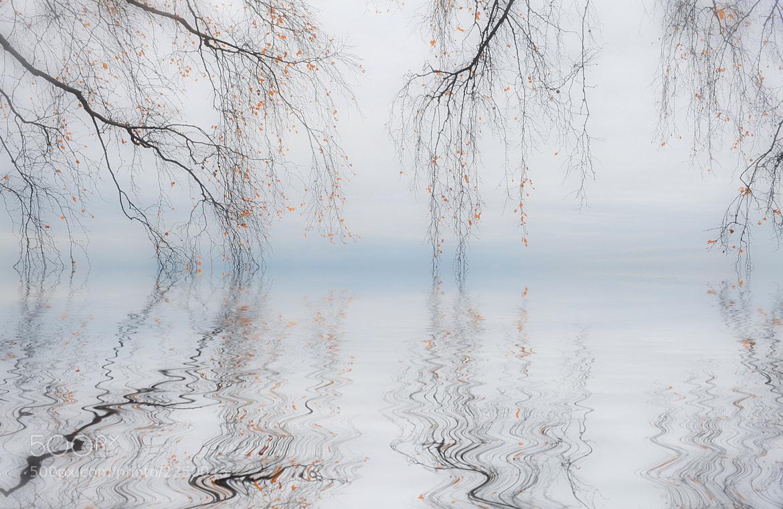 Photograph Осенняя фантазия by М. Л. on 500px