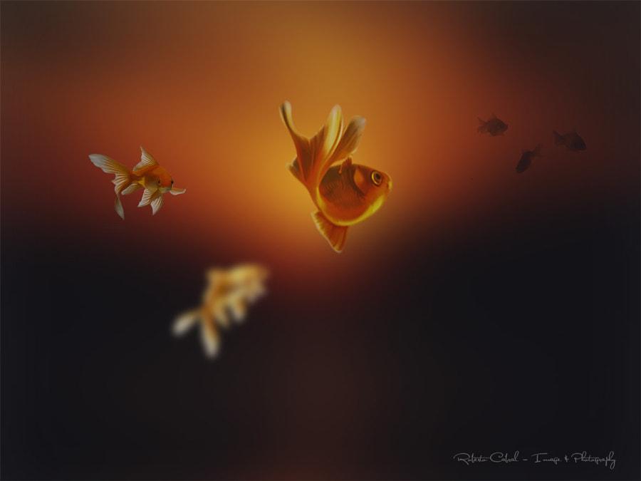 In semplice contemplazione de Roberto Cabral │Image & Photography en 500px.com