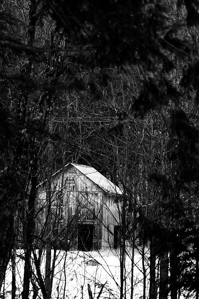 Photograph The Barn through the Trees by Nicholas Santasier on 500px