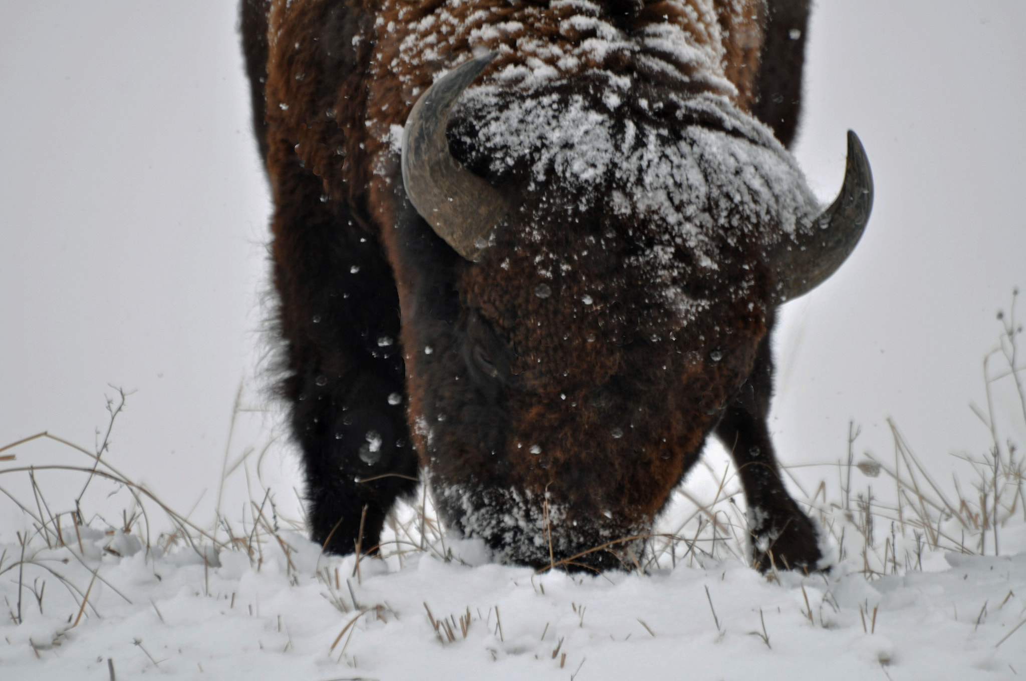 Photograph Winter Forage by Karen King on 500px