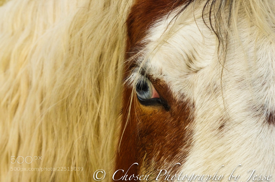 Photograph Old Blue eye.. by Jesse Brown on 500px