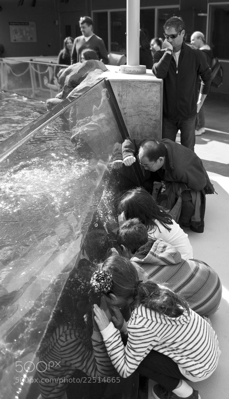 Photograph Aquarium View by Joe Randeen on 500px
