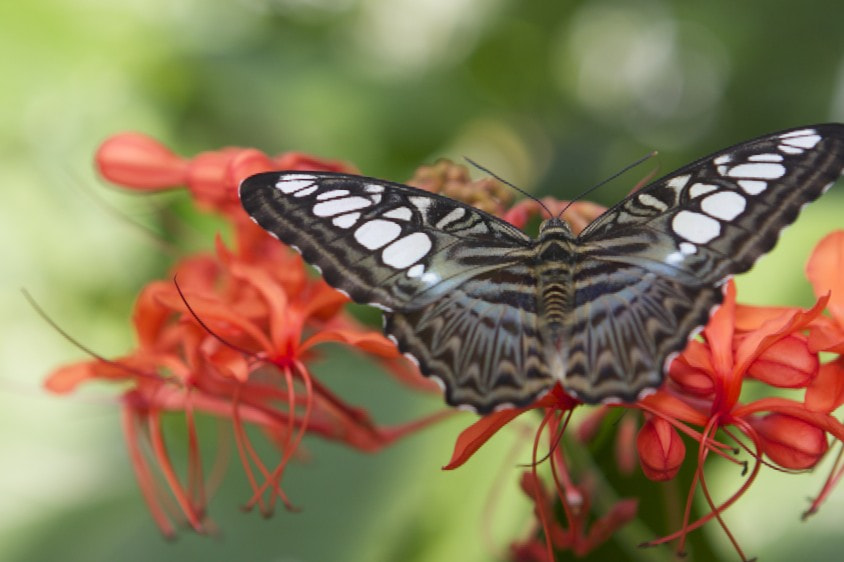 Photograph Butterfly by Hady Onaissi on 500px
