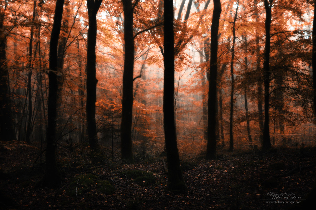 Photograph BROCELIANDE - Red frontier by Philippe MANGUIN on 500px