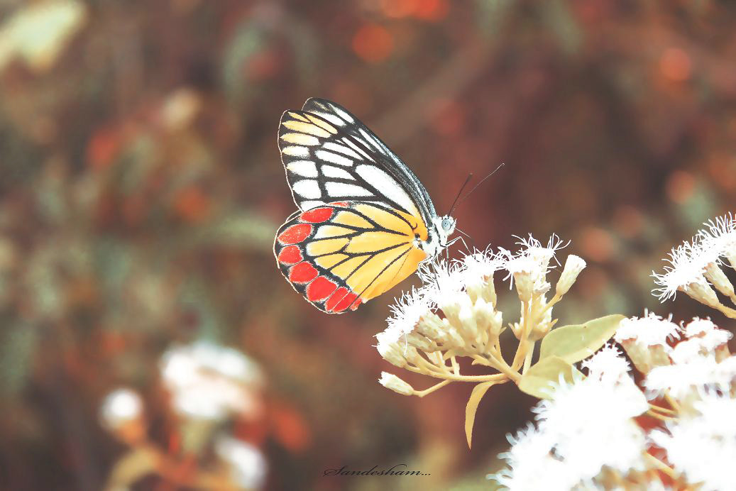 Photograph BUTTERFLY DREAMS! by Sandesh nk on 500px