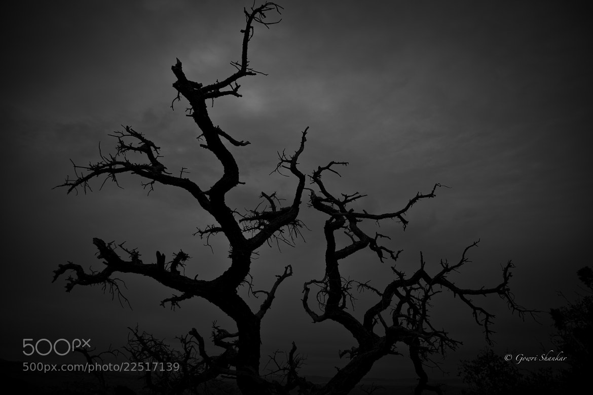 Photograph Dried out tree by Gowri Shankar on 500px