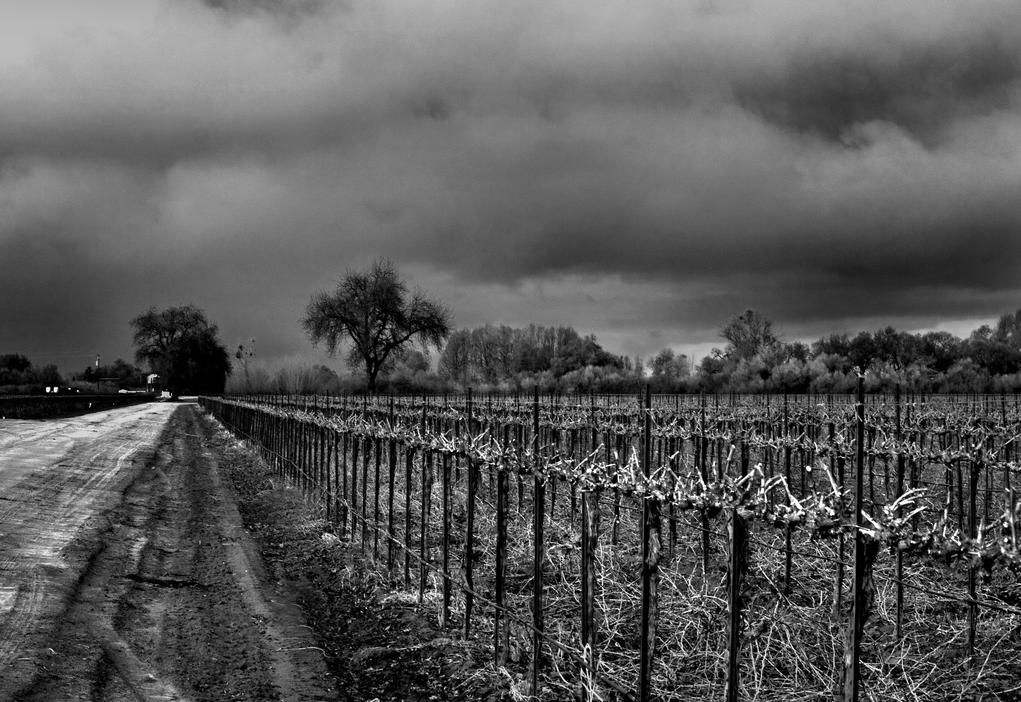 Photograph Grapevines by Mark Hendrickson on 500px