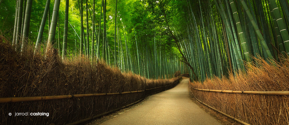Photograph Bamboo Grove by Jarrod Castaing on 500px