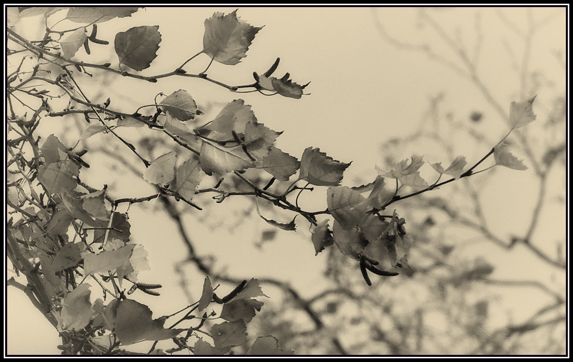 Photograph Branching Out by H. Becker on 500px