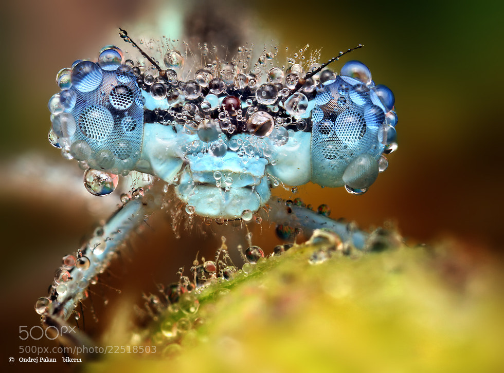 Photograph Blue eyes by Ondrej Pakan on 500px