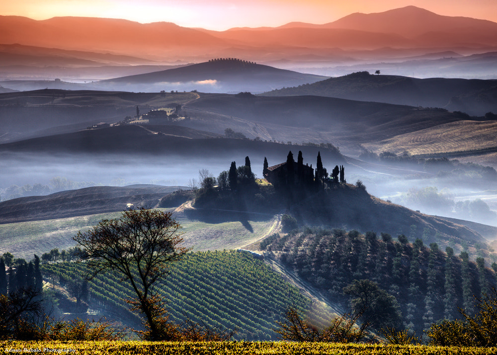 Photograph Vineyards by Adnan Bubalow on 500px