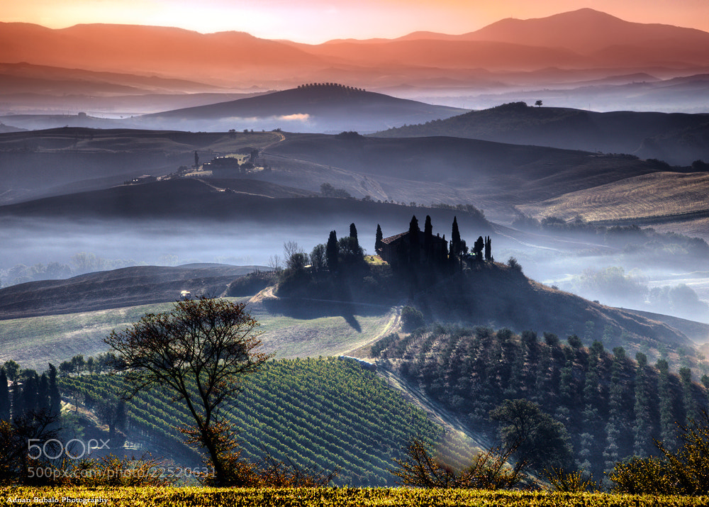 Photograph Vineyards by Adnan Bubalo on 500px
