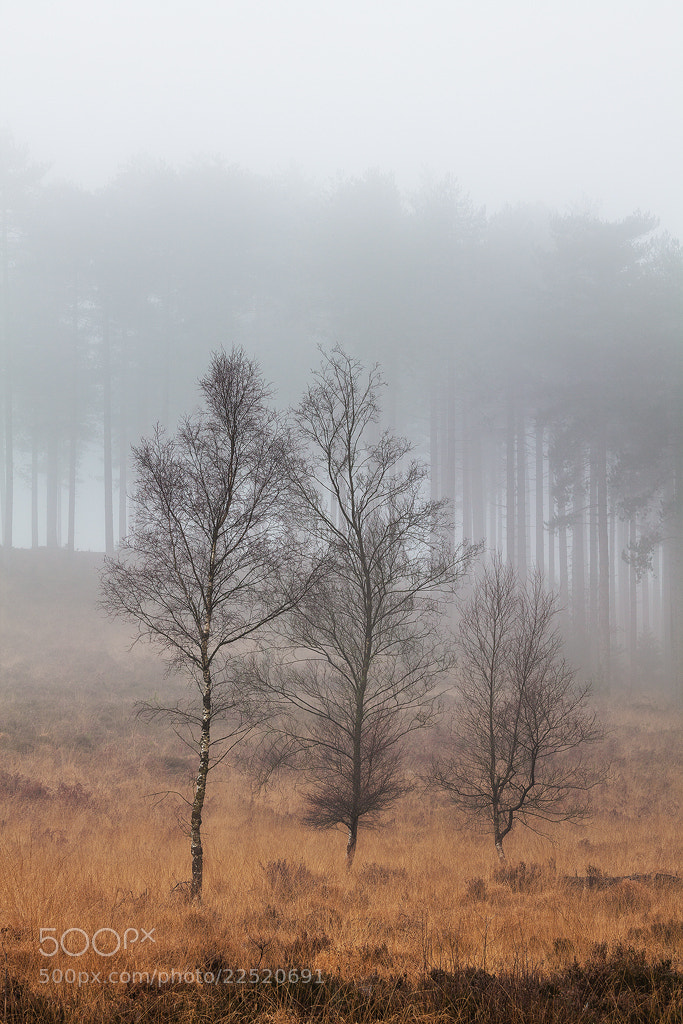 Photograph Wareham Forest, Dorset by Simon Byrne on 500px