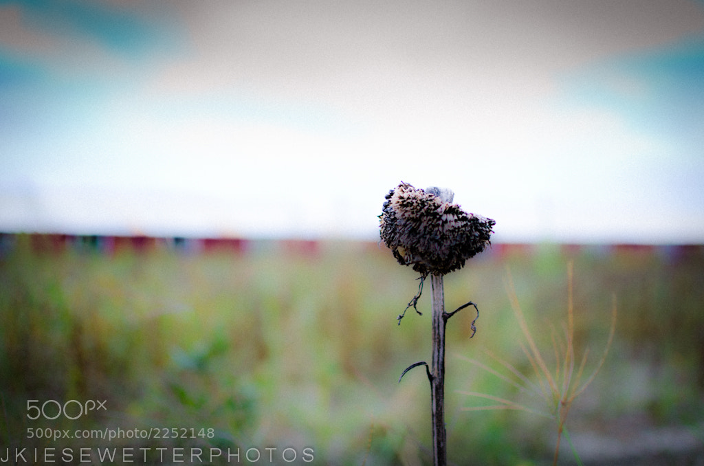 Photograph Summer's Gone by Jerry Kiesewetter on 500px