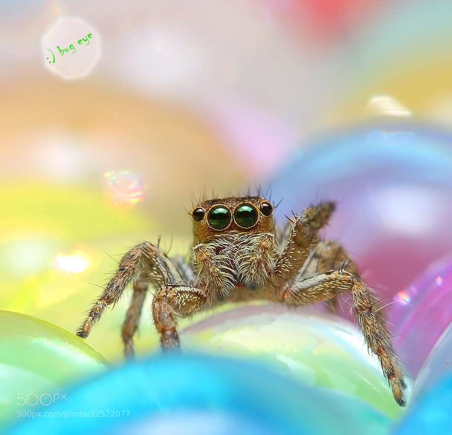 Photograph jUmpiNg SpiDer  by bug eye :) on 500px