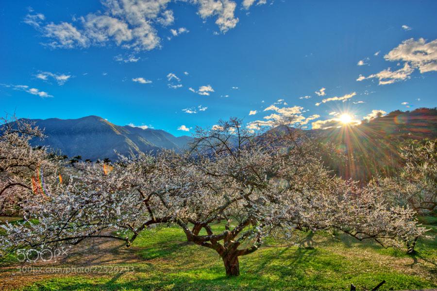 Photograph Plum Garden Sunrise by taya liu on 500px