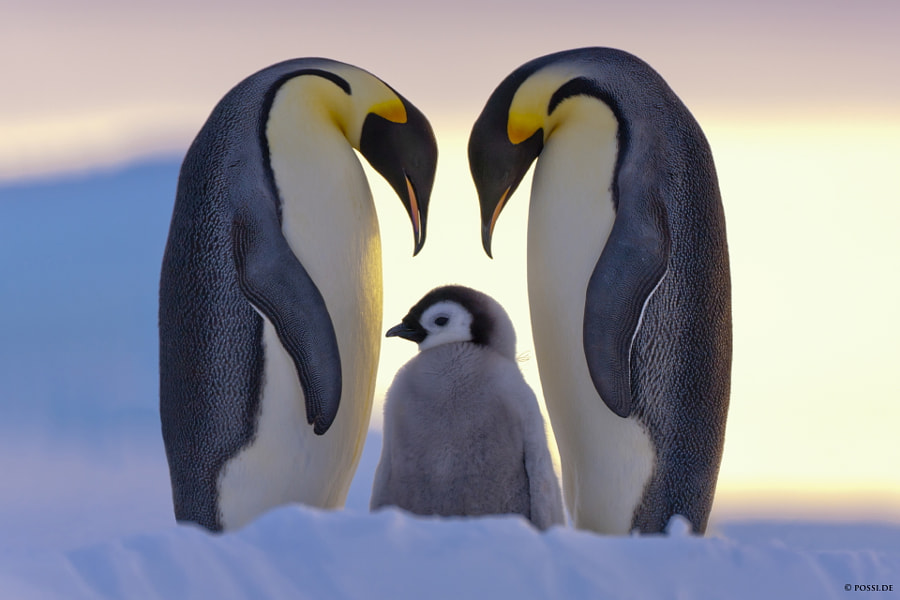 Parents Love by Anneliese & Claus Possberg on 500px.com