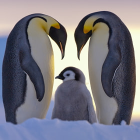 Parents Love by Anneliese & Claus Possberg (Possberg)) on 500px.com