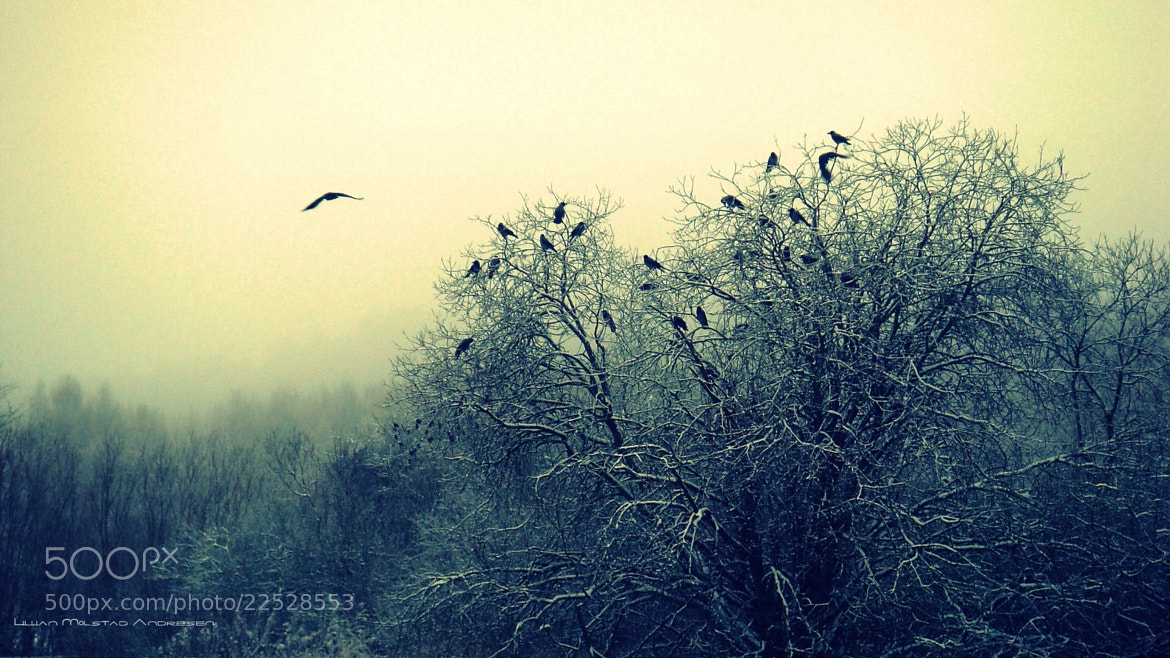 Photograph Flying Into The Fog by Lillian  Molstad Andresen on 500px