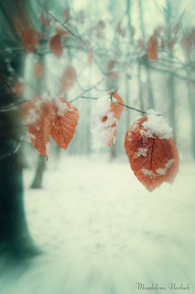 Photograph The last leaves.... by Magdalena Narloch on 500px
