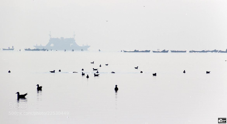 Photograph Gulls & Hunters Clams by Serkan Peksaglam on 500px