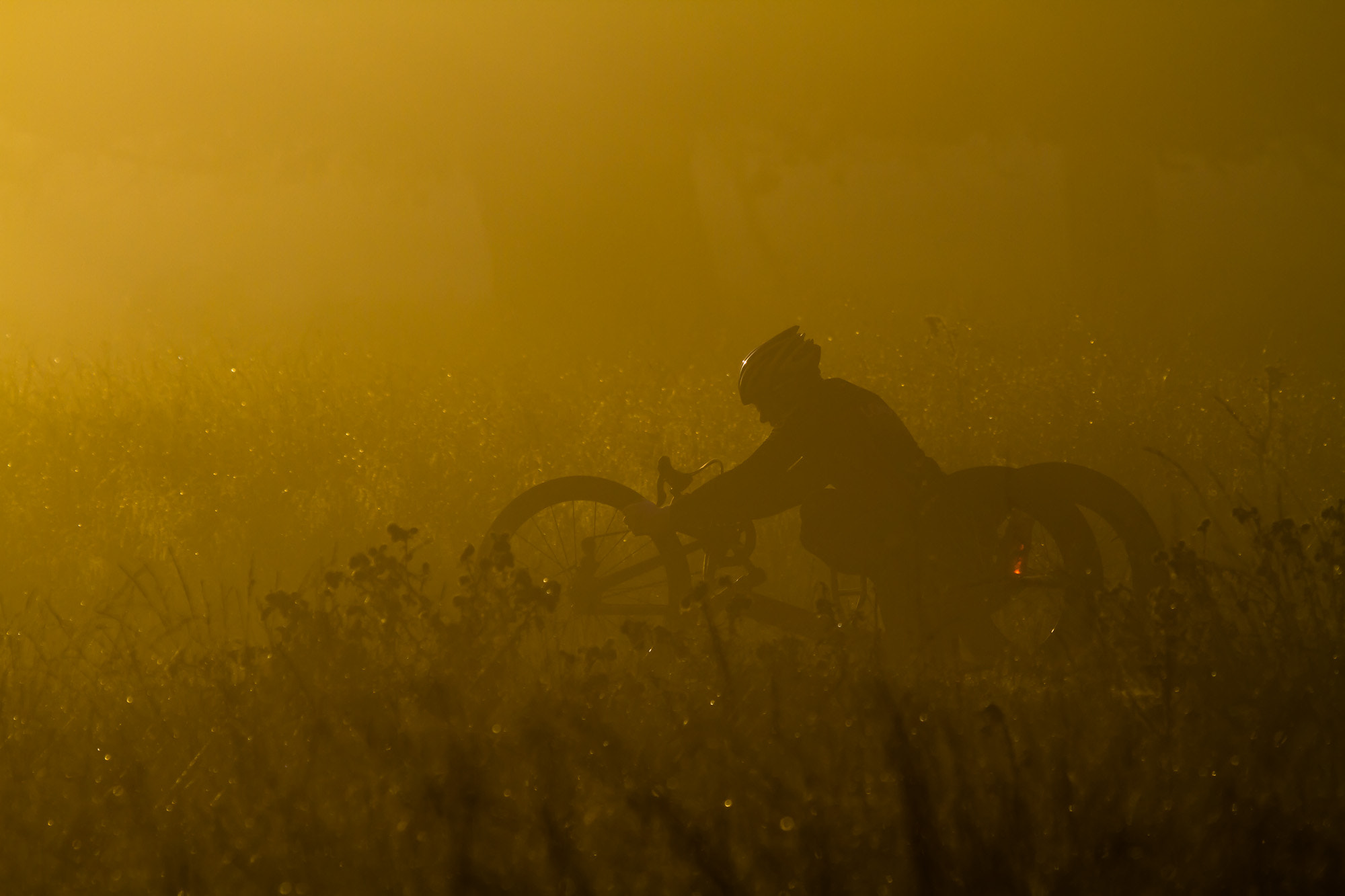 Photograph Ride through the Fog by Steve Bryson on 500px