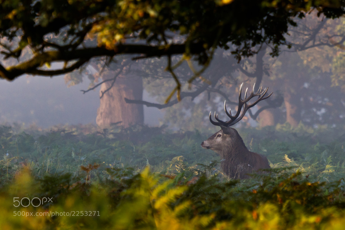 Photograph Red Deer by Steve Bryson on 500px