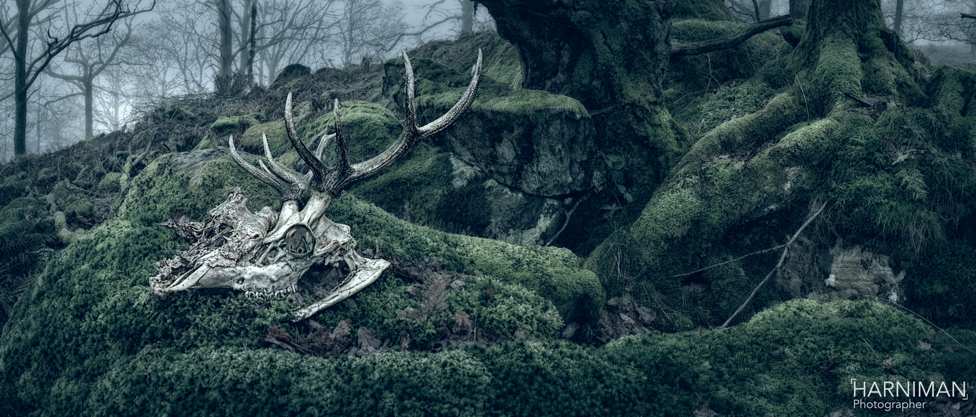 Photograph Stag Skull by Nigel Harniman on 500px